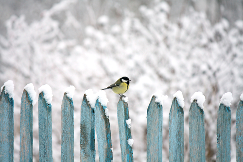 A bird sits on a snowy wooden fence