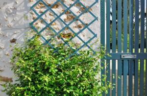 Garden trellis supporting foliage