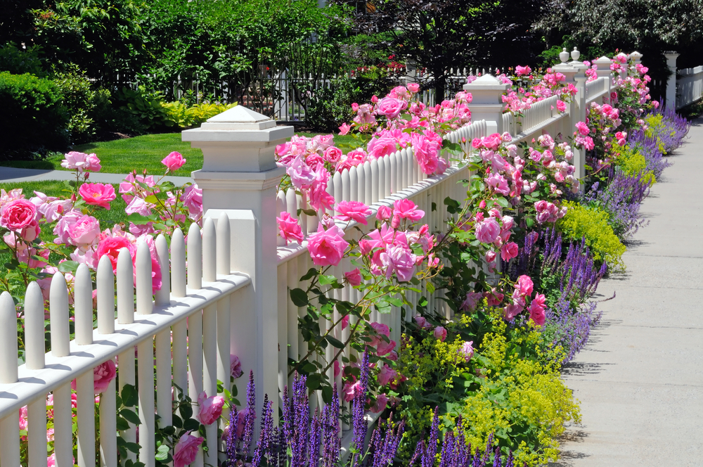 Fence adorned with bright flowers